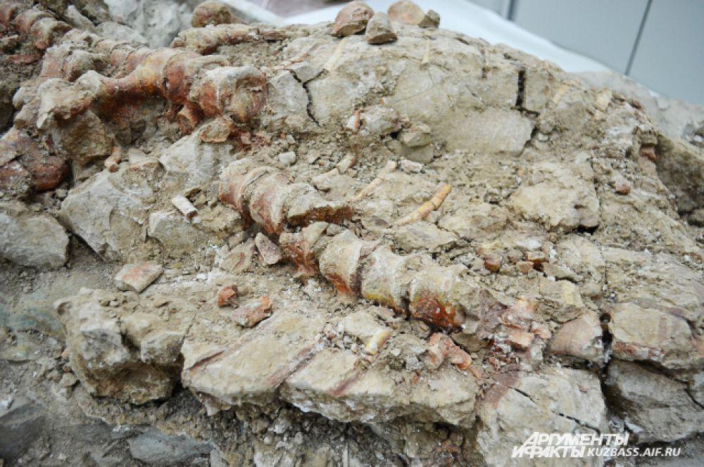 Благодаря минерализации костей мы можем оценить их форму и размеры.