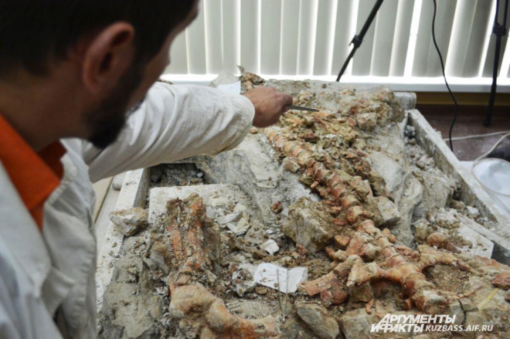 Под одним скелетом скрывается другой, но до него учёные ещё не добрались.