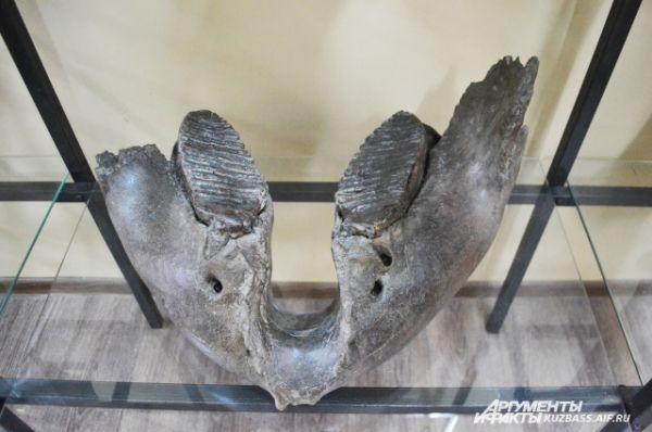 У мамонта было всего четыре зуба, если не считать бивней. Два сверху и два снизу.