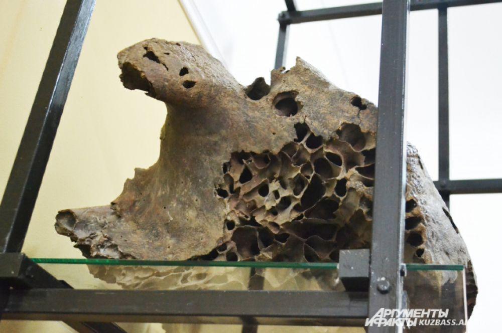 Если бы череп мамонта не был пористым внутри, он просто не смог бы его поднять.
