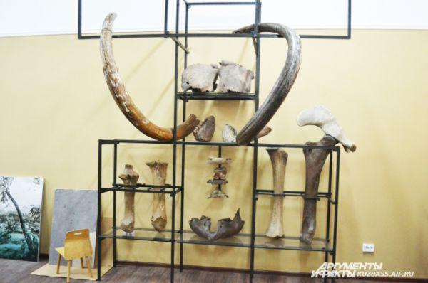 Мамонт! Величественность этого животного можно оценить всего по нескольким костям. Четыре метра в холке – средний рост для него.