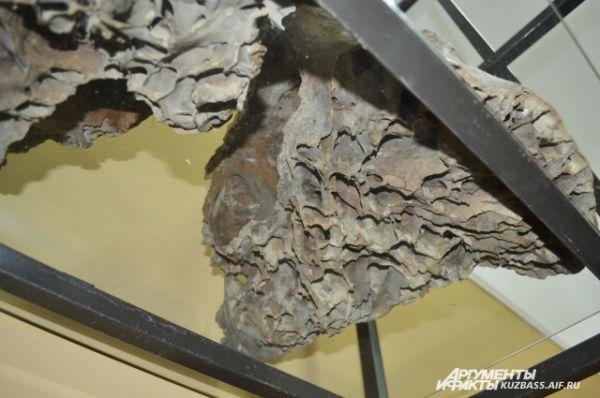 У посетителей музея есть возможность заглянуть мамонту в голову. Каждый без труда убедится, что мозг у него был не больше мозга ребёнка 11-13 лет.