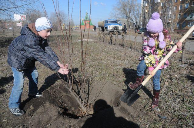 Высаживать деревья можно не только весной и осенью, но и зимой.