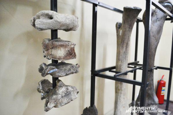 Огромный череп с бивнями держался на массивном позвоночнике.