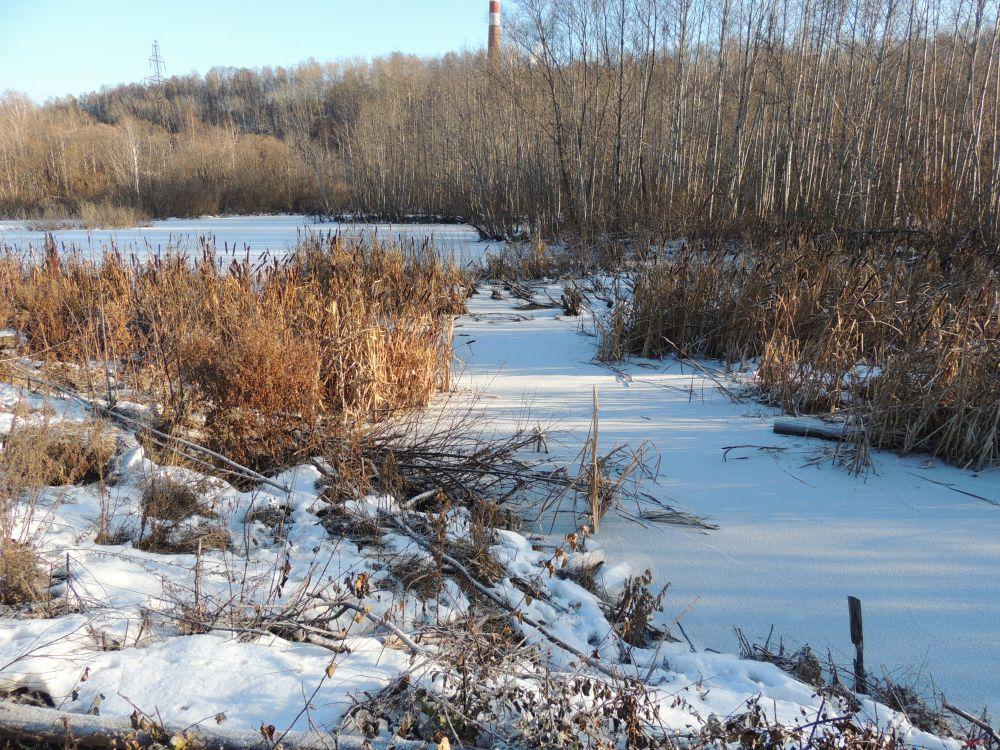 В углу фотографии - берег реки. Именно там, по словам ученого-биолога, скорее всего, находится нора бобров.