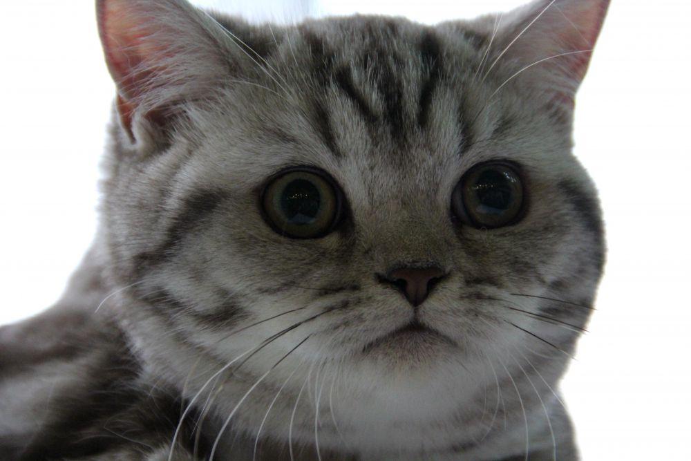 Выставка кошек в Киеве