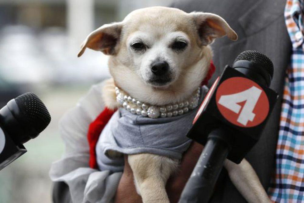 На посту мэра у Фриды вышла не такая насыщенная программа, как хотелось бы: в ее обязанности входило лишь посещение знаковых мест Сан-Франциско. Но за хорошую службу собака заработала множество игрушек и еды. Неординарные акции – не новинка для Сан-Франциско. В прошлом году город на один день превратился в выдуманный мир Готэма (реальность, в которой существует Бэтмен) в честь пятилетнего Майлза Скотта, который излечился от рака.