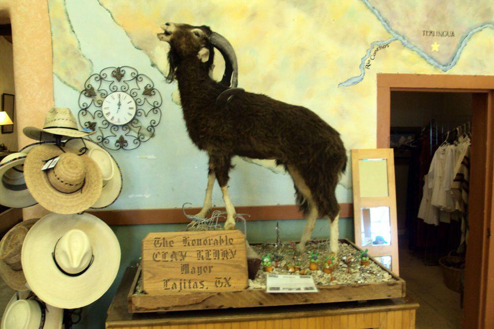 По признанию местных жителей, мэр городка Лахитас, штат Техас, – настоящий козел. Но в данном случае это не оскорбление, а действительность: с 1986 года в городе правит «династия» парнокопытных. В данный момент у власти рогатый по имени Генри Клей III.