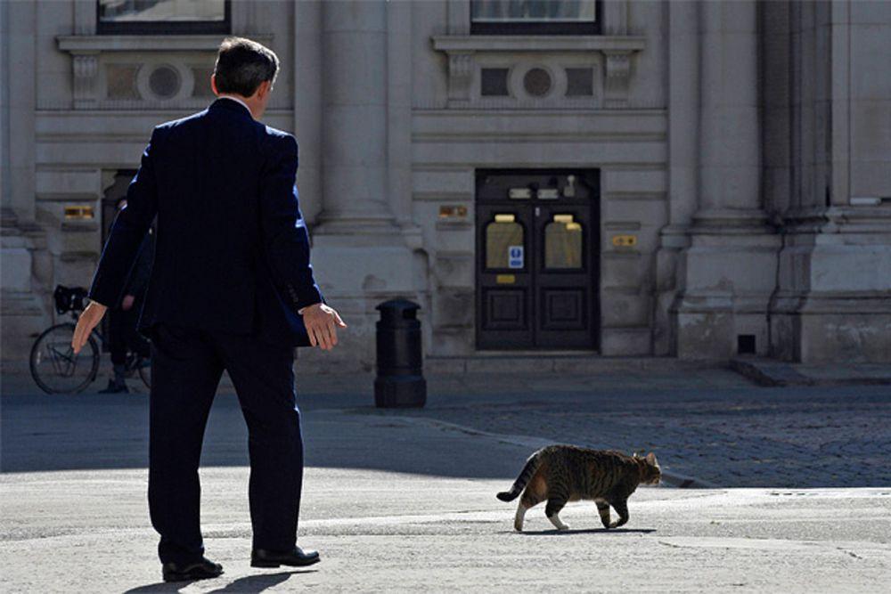 А вот кошку министра финансов Великобритании Джорджа Осборна в 2013 году обвинили, ни много ни мало, в работе на иностранную разведку. Подобную версию изложила The Daily Mail со ссылкой на обитателей правительственного квартала Лондона. Фрейя, появившаяся в семье в 2009 году, спустя несколько месяцев бесследно исчезла и была найдена и возвращена владельцу лишь в 2011 году. Её идентифицировали по вживлённому микрочипу и вернули хозяевам. За время отсутствия кошки Джордж Осборн из оппозиционного политика превратился в министра финансов.