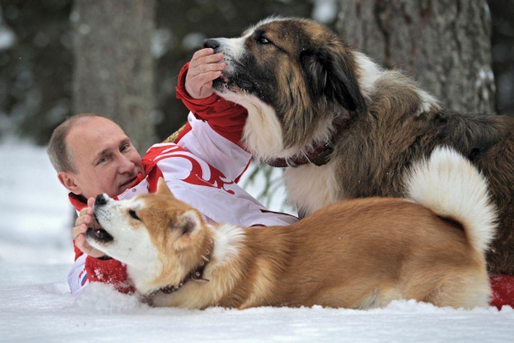 Болгарская овчарка Баффи и акито-ину Юмэ – любимые питомцы Владимира Путина.