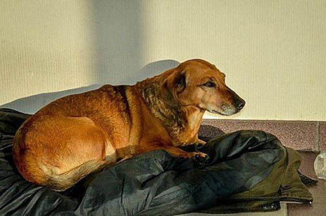 Собака Маша больше не грустит в больнице.