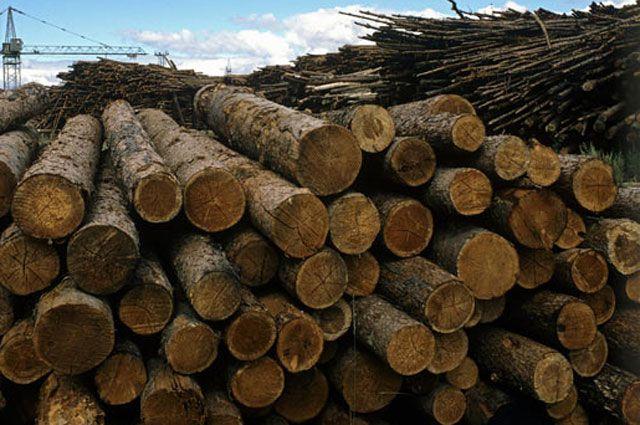 в Приангарье в ноябре незаконно заготовили 450 кубических метров древесины.