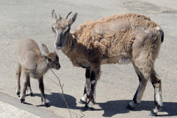 Галатея - нежная мать: это третий ее детеныш.