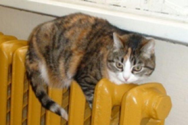 Котики тоже любят тепло.