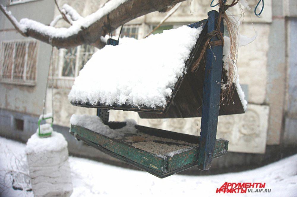 ...а в кормушке только снег.