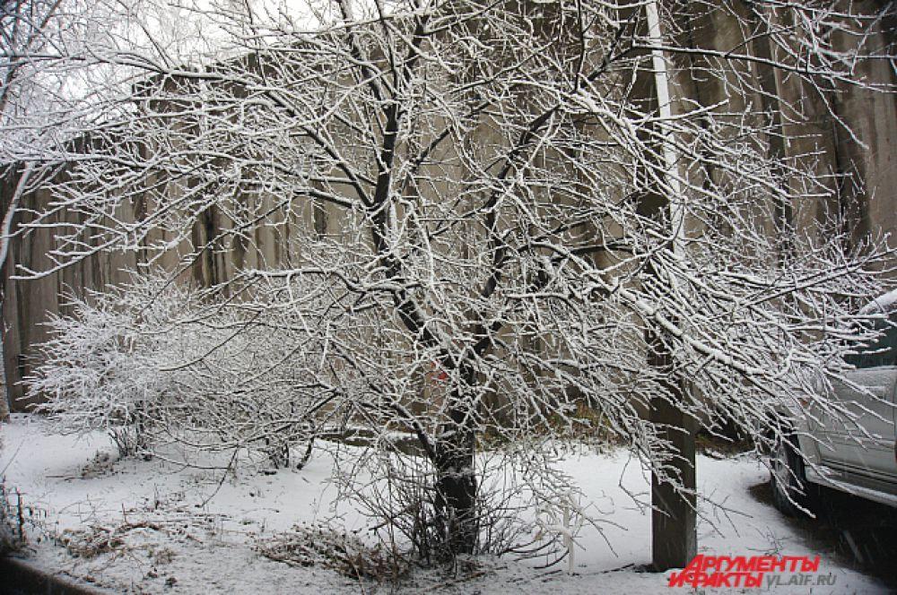Снег причудливо разукрасил деревья.