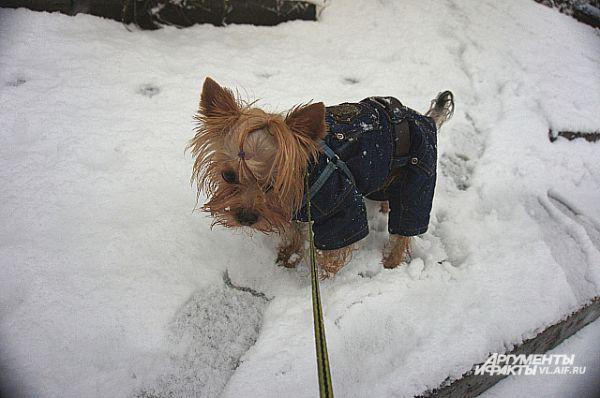 Братья меньшие не в восторге от мокрого снега.