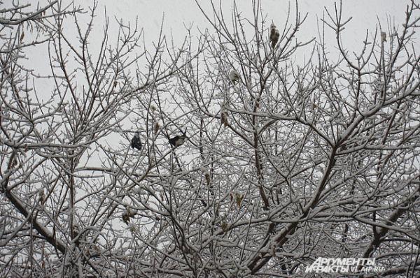 Птицы сидят на деревьях в ожидании корма...