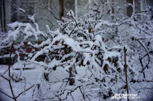 Художница-зима расписала деревья и кусты.