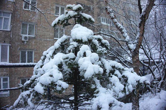 Снег уже украсил ёлки к Новому году.