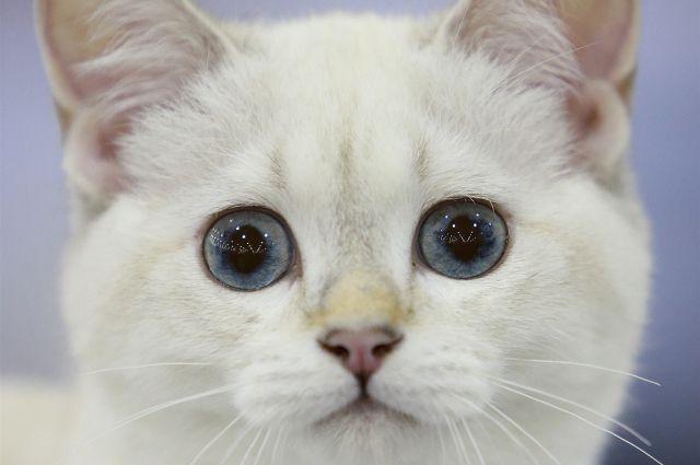За котом было некому присмотреть, поэтому он остался в больнице.