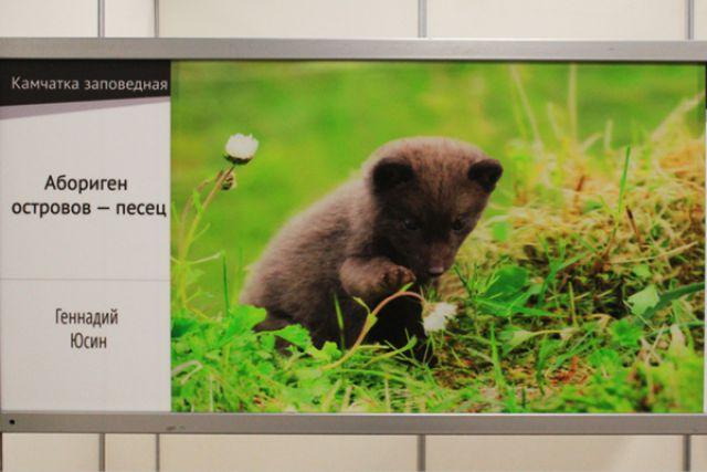 Фото с сайта Правительства Камчатского края.
