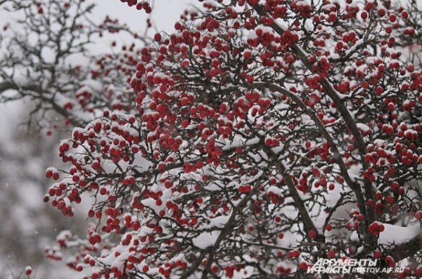 Деревья нарядились снежными кружевами.