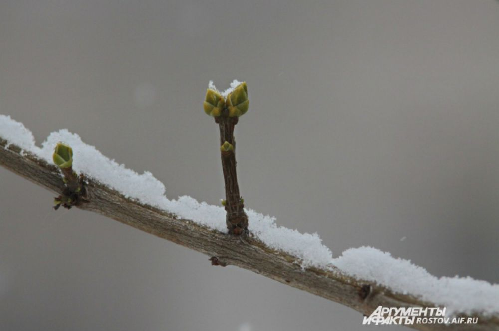 Нет зимы, которая бы не кончалась.