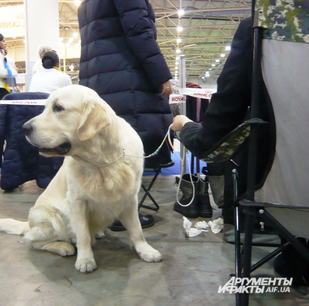 Выставка собак всех пород в Киеве