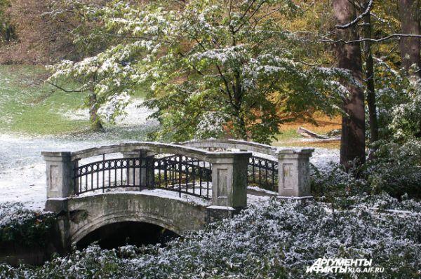 Не желает наступать зима и в Калининграде. Снега там практически нет, а на деревьях до сих пор зеленая листва.