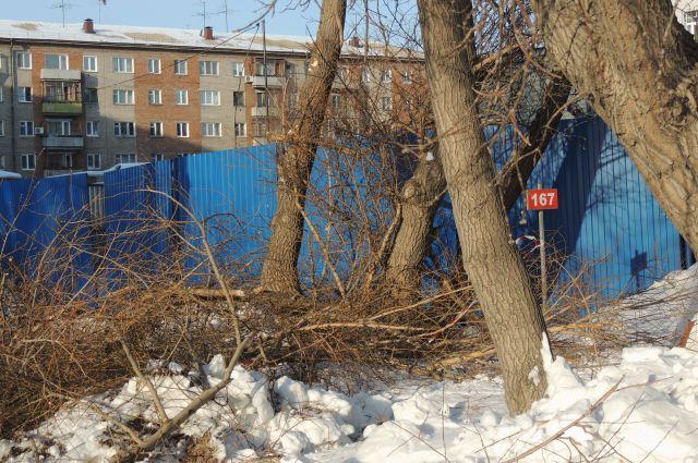 В Омске вырубают старые и аварийные деревья.