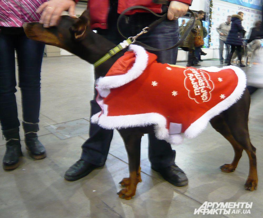 Собачий Санта-Клаус: «We wish you a merry Christmas and a happy New Year!»