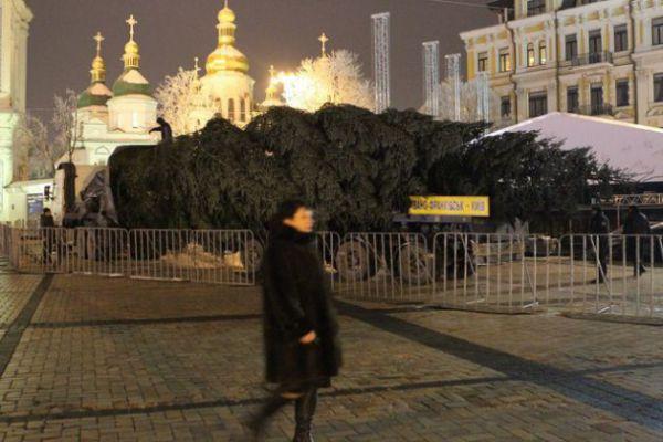 В Киев привезли главную новогоднюю елку