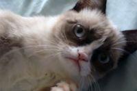 Кошечку назвали Соус Тартар.