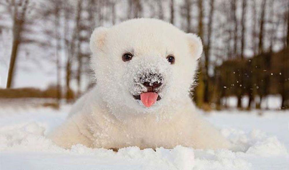 Животные, которые впервые увидели снег