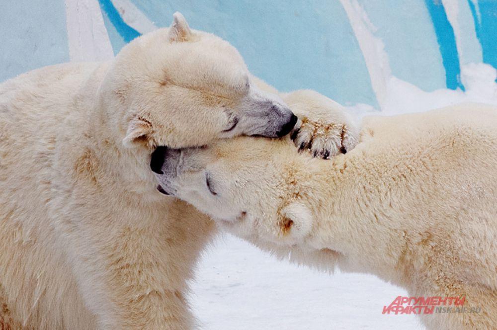 Герда страстно поцеловала Кая...