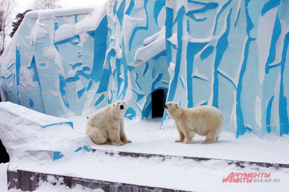 Вдруг белые медведи заметили, что за ними наблюдают и разошись в разные стороны