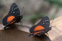 Выставка живых тропических бабочек продлится до конца февраля.
