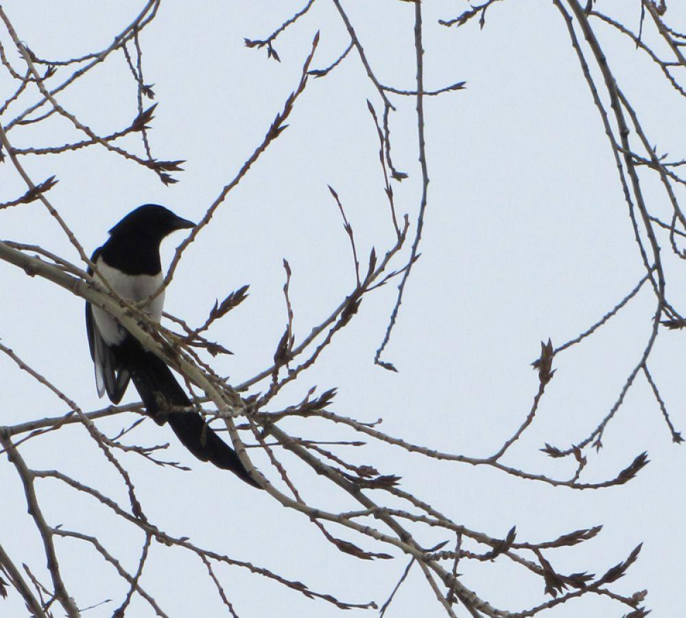 Зимой птицам приходится несладко