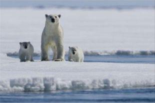 Дания стала первой страной, подавшей заявку на присоединение части Арктики