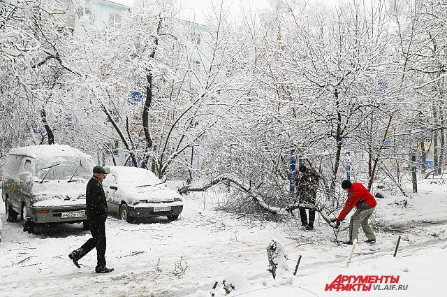 Сильный ветер и обильный снегопад вновь грозят поломать деревья.