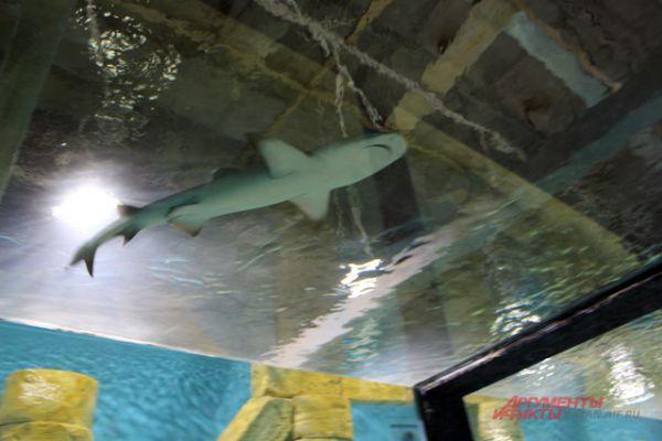 Акула в океанариуме.