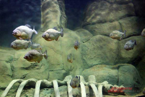 Разнообразие рыб в океанариуме.