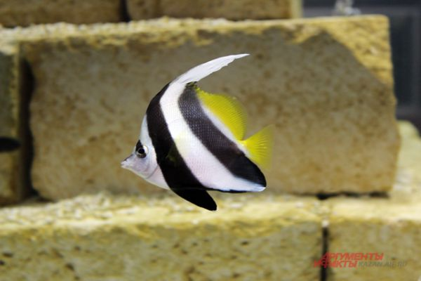 Экзотические рыбы плавают в аквариумах.