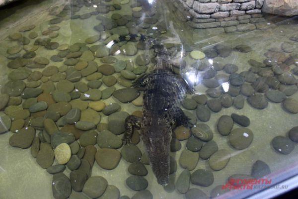В океанариуме пять крокодилов.