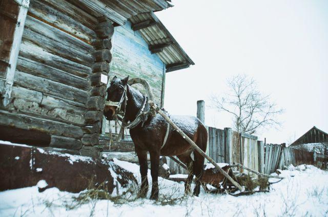 Какой русский будет равнодушен к катанию на повозке.