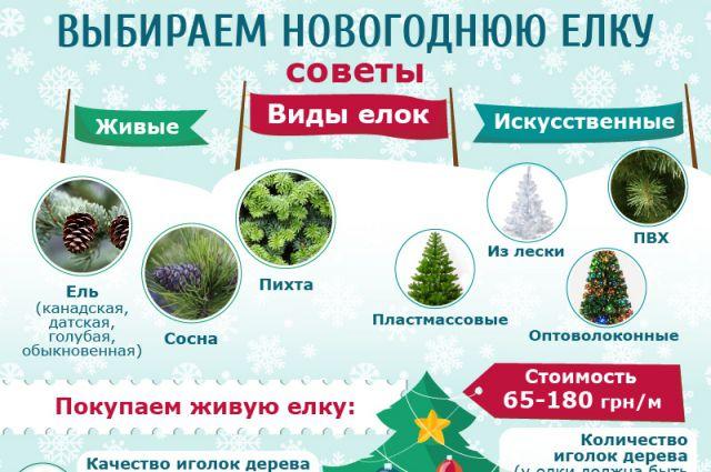 Как правильно выбирать новогоднюю елку