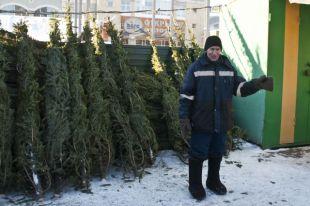 По точкам продаж новогодних деревьев в Омске начались рейды