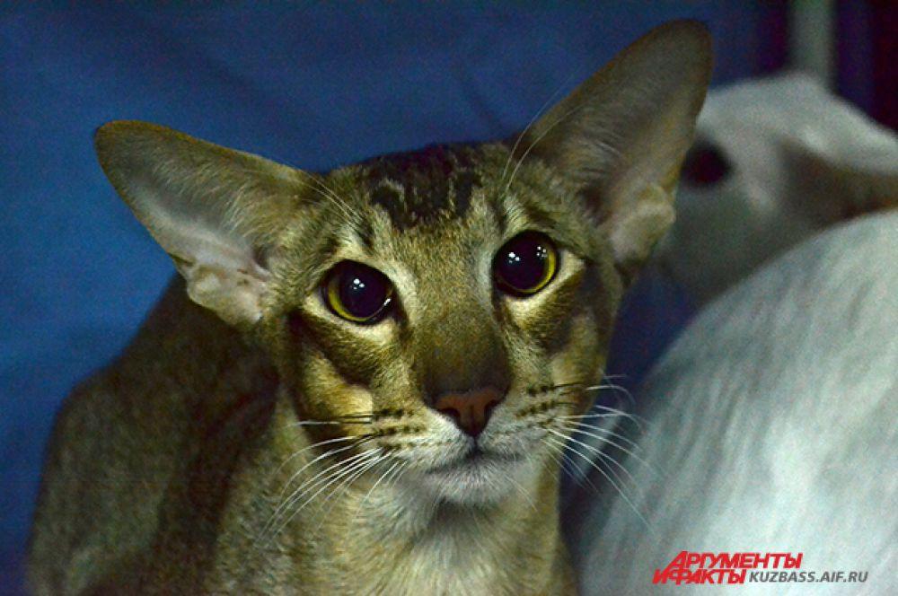 Некоторые коты с охотой разглядывали то, что происходило вокруг.