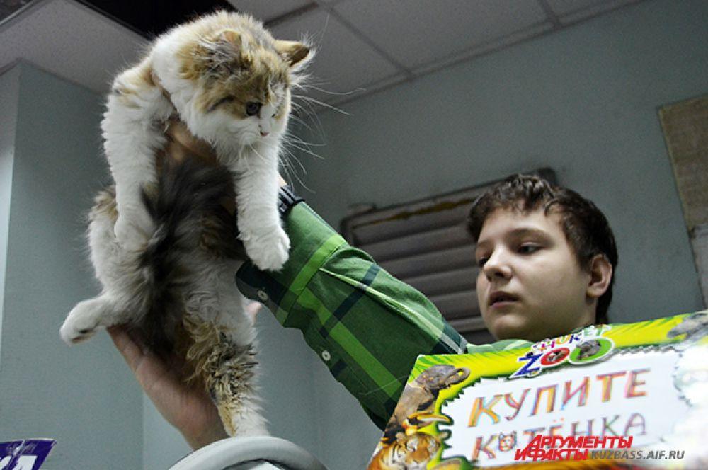 Если решили приобрести котёнка, то выставка – то самое место, которое вам нужно.